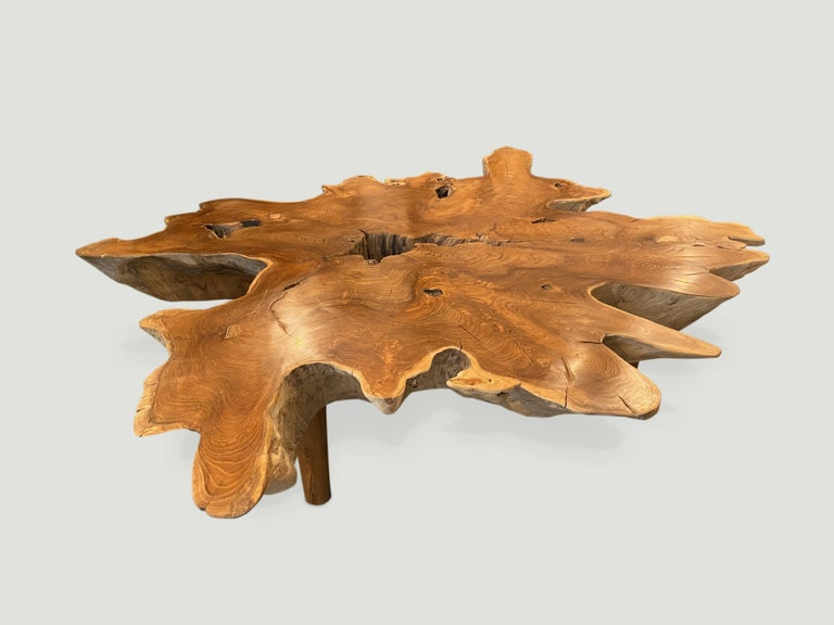 Contemporary Andrianna Shamaris Teak Wood Organic Root Coffee Table For Sale