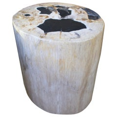 Andrianna Shamaris White and Black Super Smooth Petrified Wood Side Table