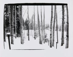 Andy Warhol, Photograph of Birch Trees in Aspen, 1979