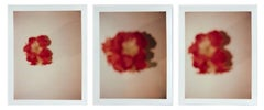 Andy Warhol, Set of Three Polaroid Photograph of Flowers, 1982