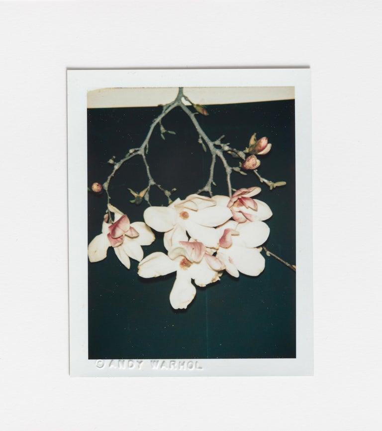 Andy Warhol Still-Life Photograph - Flowers