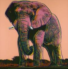 African Elephant (FS II.293)