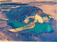 Sea Turtle (FS II.360A)