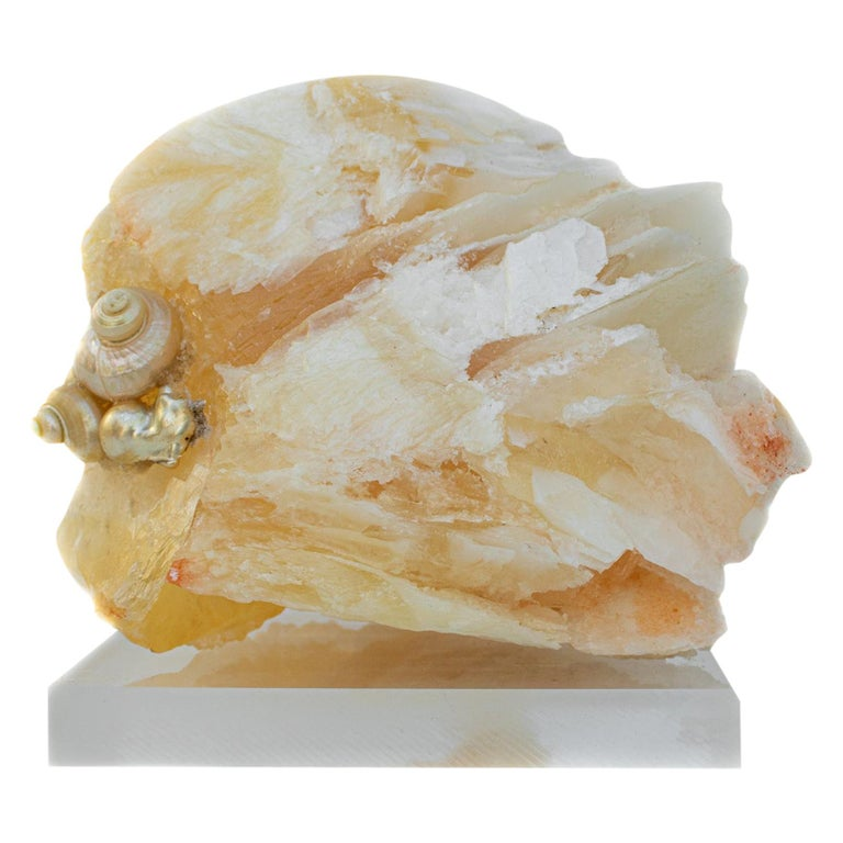 Angel Wing Calcite with Pearlescent Shells and Baroque Pearls on Lucite For Sale