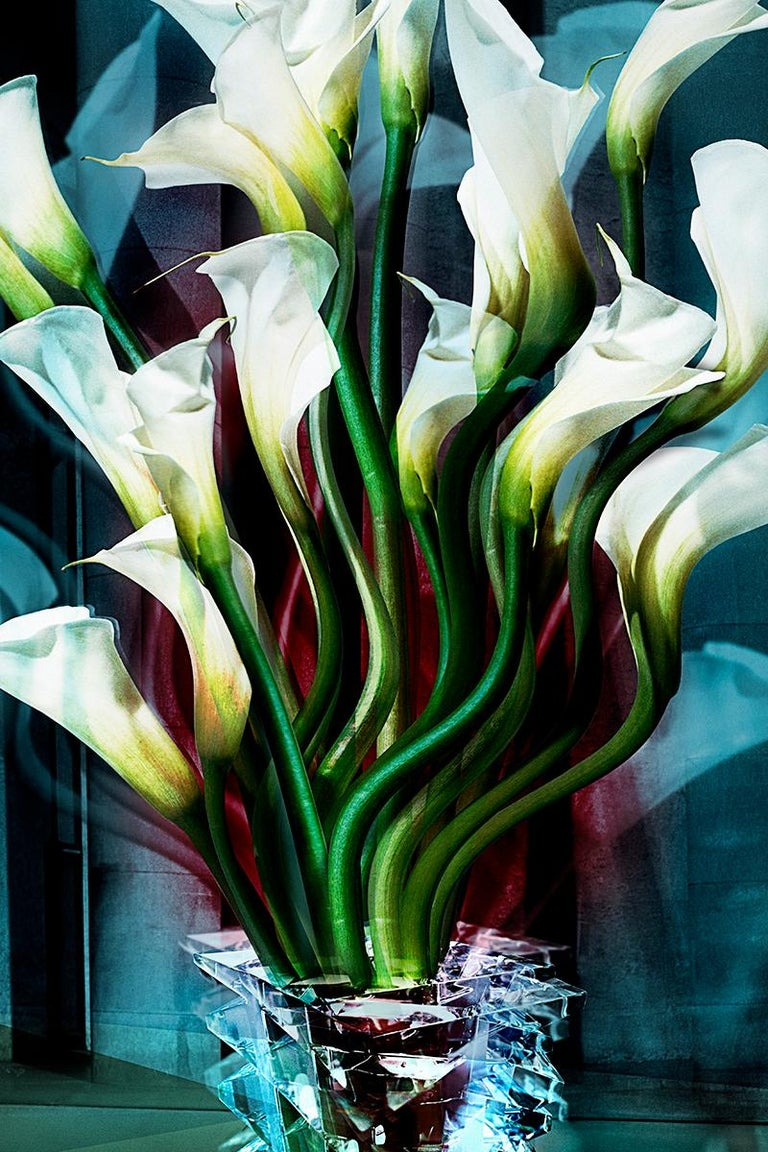 Calla Lilies - Modern Photograph by Angelika Buettner