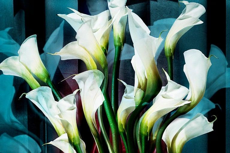 Calla Lilies - Black Still-Life Photograph by Angelika Buettner