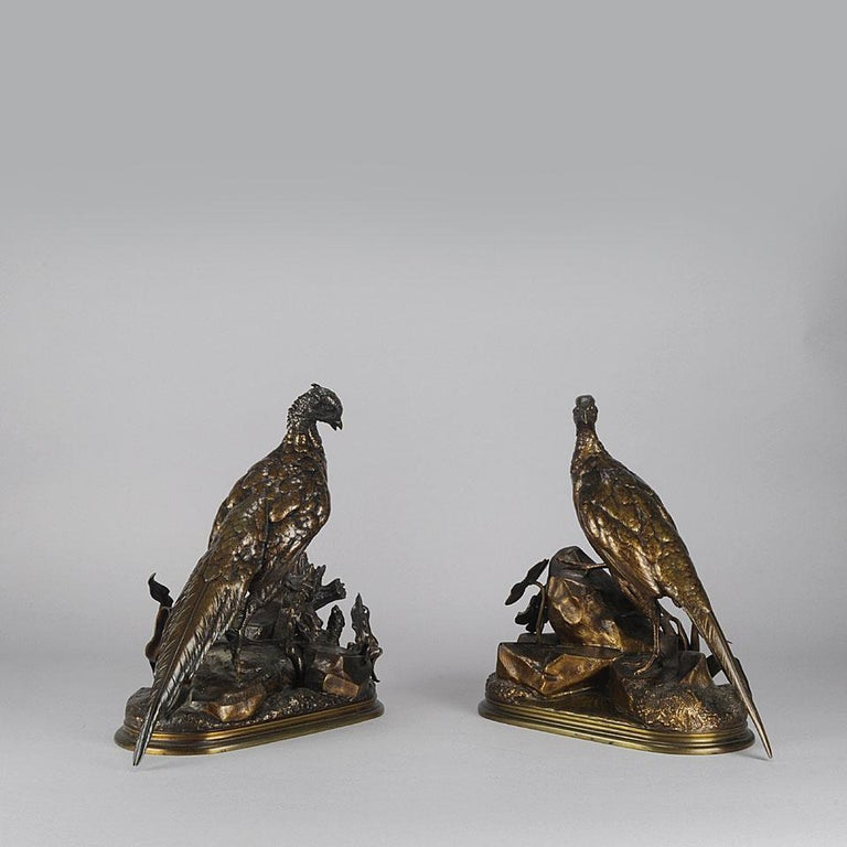 A very impressive pair of 19th century French Animaliers bronze figures of a male and female pheasant; the male cock pheasant standing on top of a naturalistic rocky outcrop with a stoat in the undergrowth; the female standing alert on a rock, her