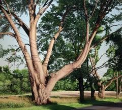 TRIMMED TREES, photo realism, tree line, tree bark, green landscape, foliage