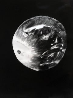 Moon (Abstract Camera-less Still Life Photograph in Black & White, Framed)
