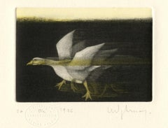 Oie (A lone goose runs across a field)