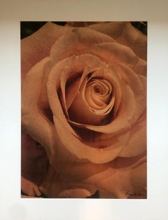 """""""Copper Rose"""" by Anne Muller, Emulsion lift on copper mulberry paper, 2021"""