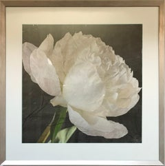 """""""Pivoine d'Argent"""" by Anne Muller, Photographic lift on mulberry paper, 2021"""