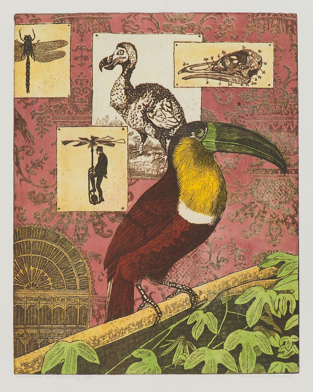 "Annemarie Petri - ""Interior of an Ornithologist"" - toucan bird - edition size 25"