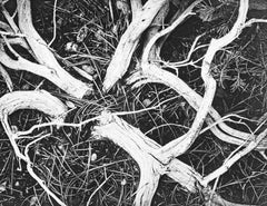 Manzanita Twigs in Kings River Sierra, a Photograph by Ansel Adams