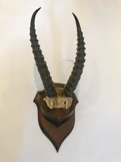 Antelope Antlers Mounted on a Double Plaque with Oak Shield Back
