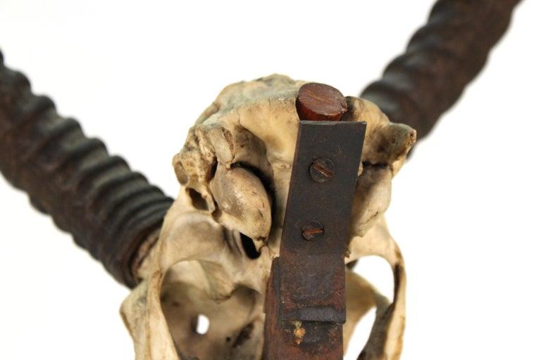 Anthony Redmile Mounted Impala Horns and Skull on Pyramidal Base For Sale 4
