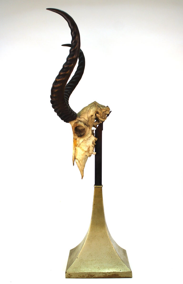 Mid-Century Modern Anthony Redmile Mounted Impala Horns and Skull on Pyramidal Base For Sale