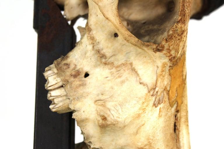 Anthony Redmile Mounted Impala Horns and Skull on Pyramidal Base For Sale 2
