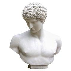 Antinous Plaster Bust