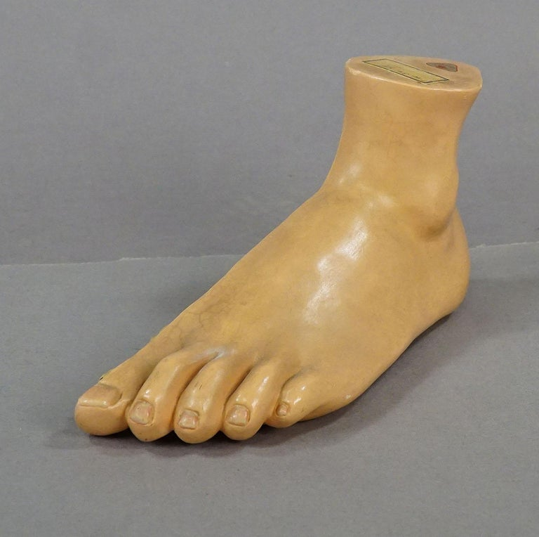 A delicately hand painted and highly detailed anatomical foot model for class. Made of papier mâché, and plaster. Manufactured by Somso, Germany, circa 1930. With manufacturer paper label and inventory label. Good condition, surface partly soiled,