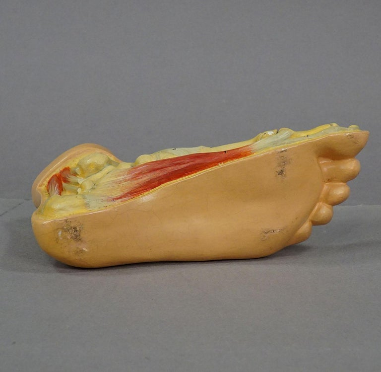 20th Century Antique 3D Anatomical Foot Model Made by Somso, circa 1930 For Sale