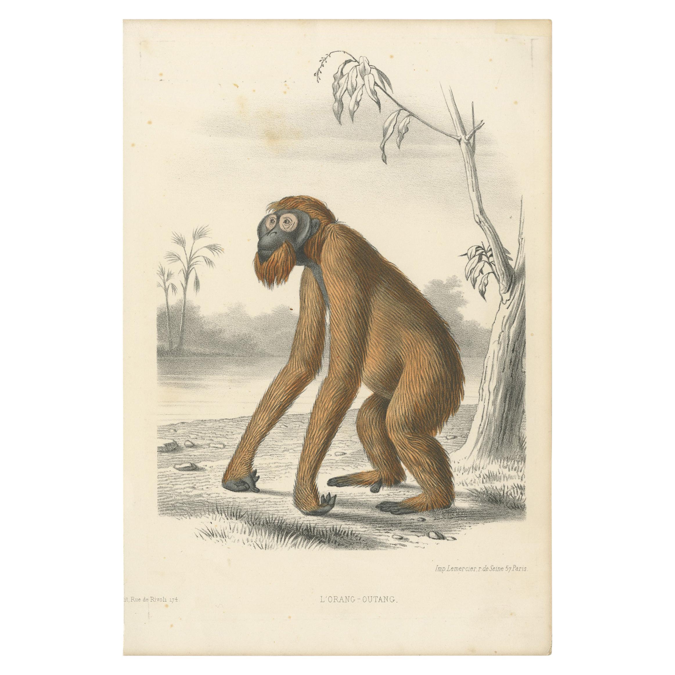 Image result for orangutan atique print