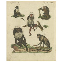 Antique Animal Print of Various Monkeys by Bertuch, circa 1800