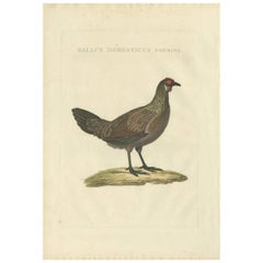 Antique Bird Print of a Chicken by Sepp & Nozeman, 1829