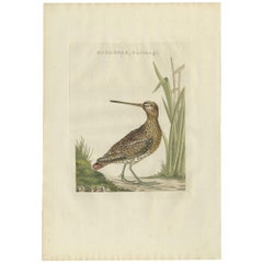 Antique Bird Print of a Common Snipe by Sepp & Nozeman, 1797
