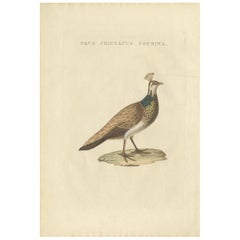 Antique Bird Print of a Female Indian Peafowl by Sepp & Nozeman, 1829