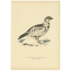 Antique Bird Print of a Hybrid Black Grouse and Willow by Von Wright '1927'
