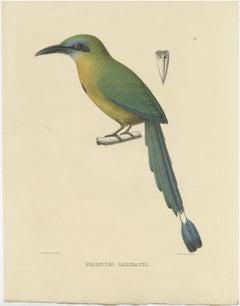 Antique Bird Print of a Keel-Billed Motmot by Severeyns (c.1850)