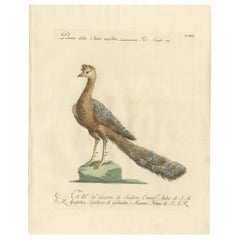 Antique Bird Print of a Peacock by Manetti, 'circa 1770'