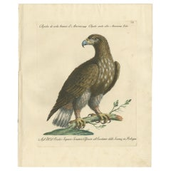 Antique Bird Print of a White-Tailed Eagle by Manetti, circa 1770