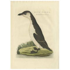Antique Bird Print of a Young Puffin by Sepp & Nozeman, 1829