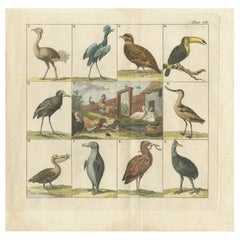 Antique Bird Print of an Ostrich, Toucan, Pelican and Other Birds, 1808