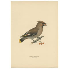 Antique Bird Print of the Bohemian Waxwing by Von Wright, 1927
