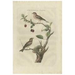 Antique Bird Print of the Common Chaffinch by Sepp & Nozeman, 1789