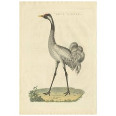 Antique Bird Print of the Common Crane by Sepp & Nozeman, 1829