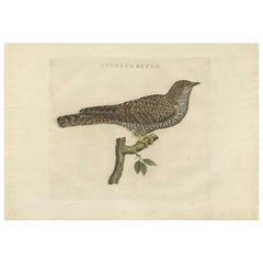 Antique Bird Print of the Common Cuckoo by Sepp & Nozeman, 1809