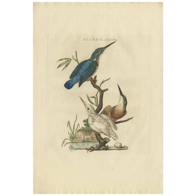 Antique Bird Print of the Common Kingfisher by Sepp & Nozeman, 1797 For Sale