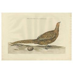 Antique Bird Print of the Common Pheasant by Sepp & Nozeman, 1789