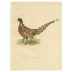 Antique Bird Print of the Common Pheasant 'Male' by Von Wright '1929'