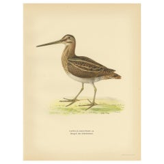 Antique Bird Print of the Common Snipe by Von Wright, 1929