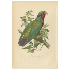 Antique Bird Print of the Conquered Lorikeet, '1853'