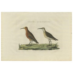 Antique Bird Print of the Curlew Sandpiper by Sepp & Nozeman, 1829