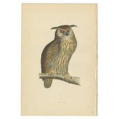 Antique Bird Print of the Eurasian Eagle Owl by Morris, c.1850