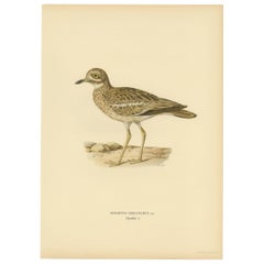 Antique Bird Print of the Eurasian Stone-Curlew by Von Wright, 1927