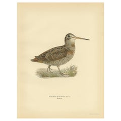 Antique Bird Print of the Eurasian Woodcock by Von Wright, 1929