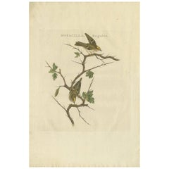 Antique Bird Print of the Goldcrest by Sepp & Nozeman, 1797